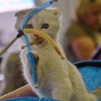 На выставке кошек :: Лилия П.
