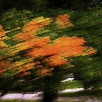 Краски осени в июне :: Сергей Ефимов