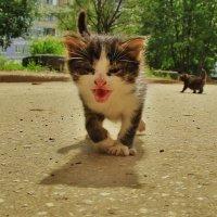 котята :: Вадим Виловатый