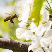 Труженник весны :: Андрей Корнеев
