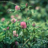 дождь прошел, оставив бусинки на листьях :: Татьяна Исаева-Каштанова