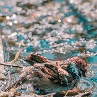 купальщик.. :: дмитрий посохин