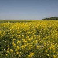 Солнечная поляна. :: Андрей Чиченин