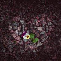 Каменное сердце :: Аннета Матыцына