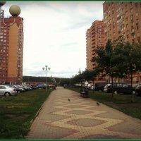 Аллея города Дзержинский Подмосковье :: Ольга Кривых