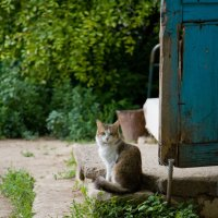 Оценивающий кот :: Dmitriy Predybailo
