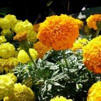 Жёлто-оранжевый восторг. :: Ирина Прохорченко
