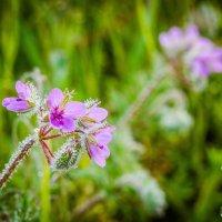 цветок :: fotomaf photorpher