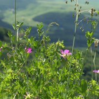 Цветы луговые :: ФотоЛюбка *