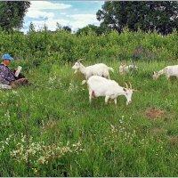 Индивидуальный инструктаж по поеданию трав. :: Роланд Дубровский