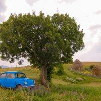 car & tree :: Евгений Гришаев