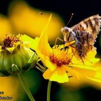 butterfly on flower :: Анна Ященко