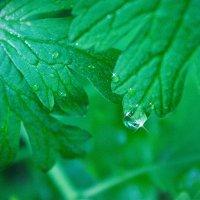 После дождя :: Альбина Козина