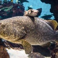 в аквариуме :: Slava Hamamoto