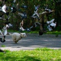 Эх, Полетаем! (http://www.disted.ru/nyip?pid=3404) :: Александр Павленко