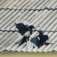 Птичье кунг фу :: Андрей Фиронов