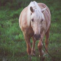 Лошадь :: Светлана Лана Левохина