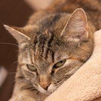 Кошка :: Мила Семенова