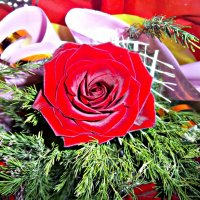 роза :: Татьяна Королёва