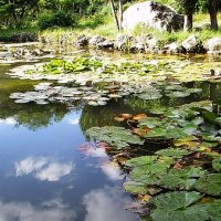 Симферополь,ботанический сад :: Константин Снежин