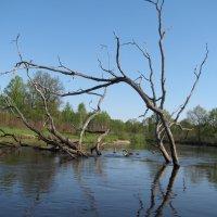 Уборть, русло реки :: Marina Chilek