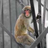 Monkey :: KatRina K
