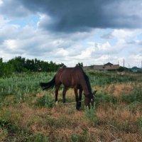 Лошадь. :: Юлиана Мещерякова