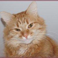 Персючий кот :: Елена Федотова
