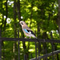 Птичка :: Гульнара Москвитина