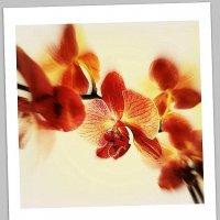 Орхидея на Полароиде :: A. SMIRNOV