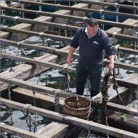 Так выращивают мидии. Риас Бахас, Испания :: Lmark