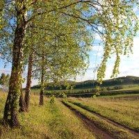 По лесной дороге. :: Наталья Юрова