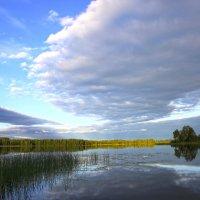вэллен.середина лета :: liudmila drake