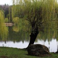 Весенний парк :: Яна Субботина