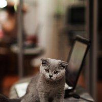 Котя :: Руслан