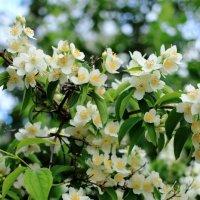 Милые цветы :: Екатерина Василькова