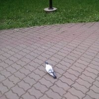 Птица :: Мася Рюмина