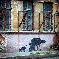 Забытый дом,бездомные животные... :: Александр Рамус