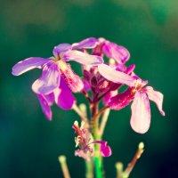 полевые цветы :: Alex Kokorev
