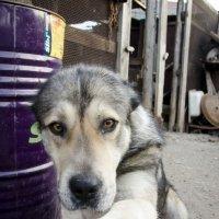 Верный пёс! Барон! :: Seda Yegiazaryan