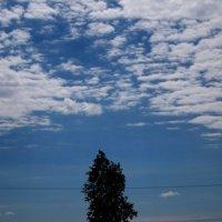 Одинокое деревце... :: Павел Зюзин