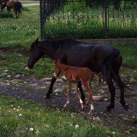 Мама с ребенком :: Екатерина Иванова