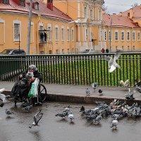 ...и голуби :: Galina