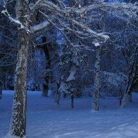 """"""" Это было недавно , это было .... """" зимой . :: Сергей Дорогокупля"""