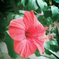 Красный цветок. :: Екатерина