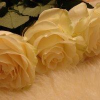 розы :: Varvara Aravrav