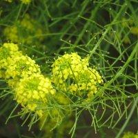 полевые цветы :: дима драйвер