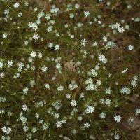Лесные цветы 2 :: Валерий Стогов