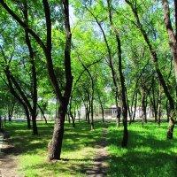 деревья :: Любовь Вящикова