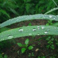 После дождя. :: Михаил Попов